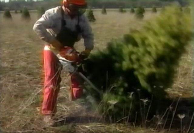 Click to play the video for Christmas Tree Harvest Safety